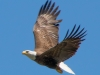 Bald Eagle #4_edited-1