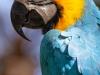 Parrot_edited-1