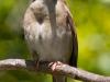 Sparrow-2-05-02-2020