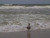 gull-the-ocean