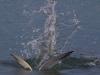 tern-under-water