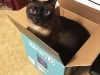 Archie-in-a-Box_edited-3