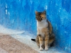 Cat-Blue-Wall_edited-1