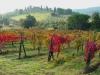 tuscan-vinyard