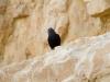 masada-bird-2