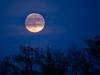 Moon-11-11-2019-4_edited-1