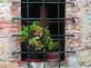 monteriggioni-window-2