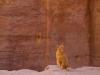 petra-cat