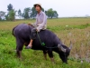 young-man-on-water-buffalo