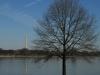 washington-monument-and-tree