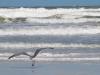 Seagull-Ocean-2_edited-1