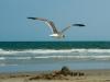 gull-sand-castle